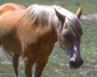 Horse Host