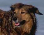 Dog Host