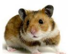 Hamster Host
